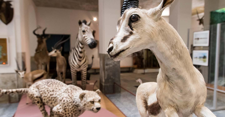a-novara-museo-faraggiana-2