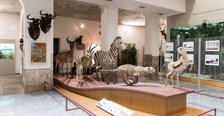 a-novara-museo-faraggiana